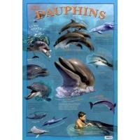 4018-poster-les-dauphins